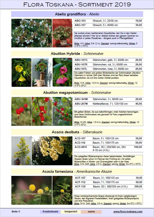 Auszug Katalog