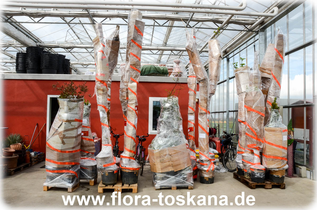 versand und verpackung flora toskana gmbh. Black Bedroom Furniture Sets. Home Design Ideas